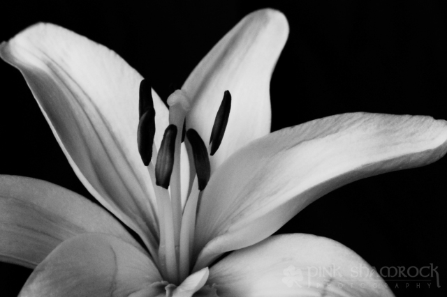 The Lily, Part 2