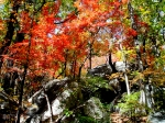 Trees and rocks in Autumn