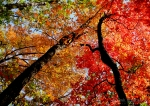 Bright Autumn Foliage