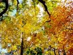 Yellow foliage