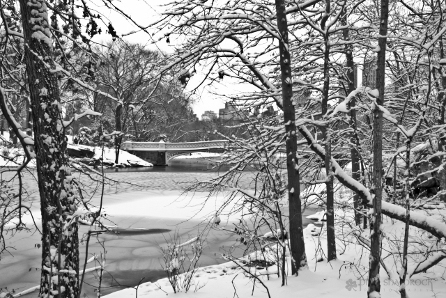 A glimpse of Central Park's Bow Bridge through snow-covered trees.