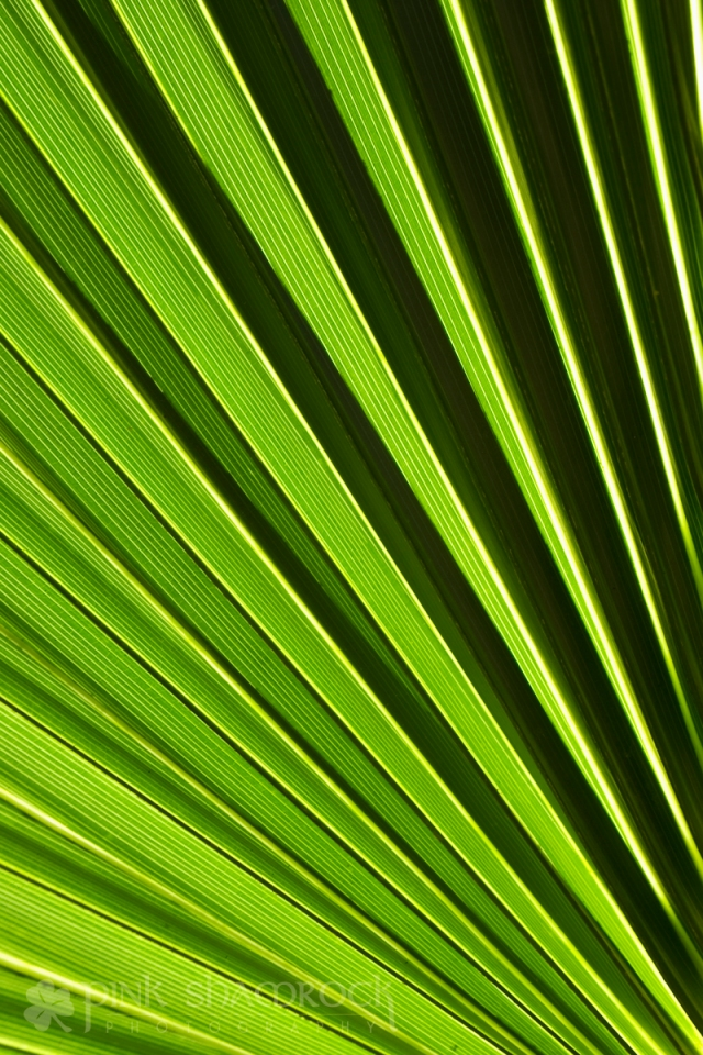 Palm in Charleston, SC
