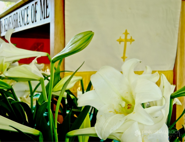 Easter lilies in front of the altar at Point Hope UMC in Mount Pleasant, SC.