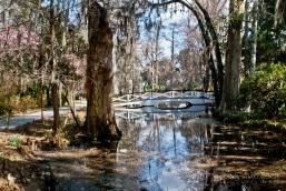 Bridge at Magnolia Plantation in Charleston, SC.