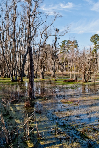 The Audubon Swamp Garden at Magnolia Plantation.