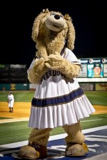 """""""Chelsea"""" - Secondary mascot for the Charleston Riverdogs baseball team."""