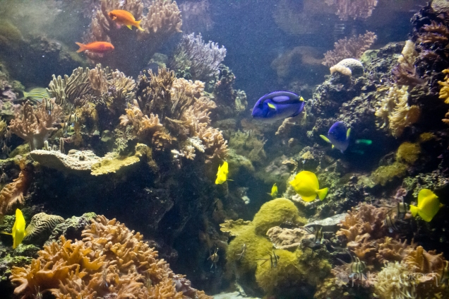 A coral reef exhibit at the National Aquarium in Baltimore, Maryland.