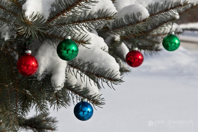"""White Christmas"" - Ornaments hang from snow-covered evergreen"